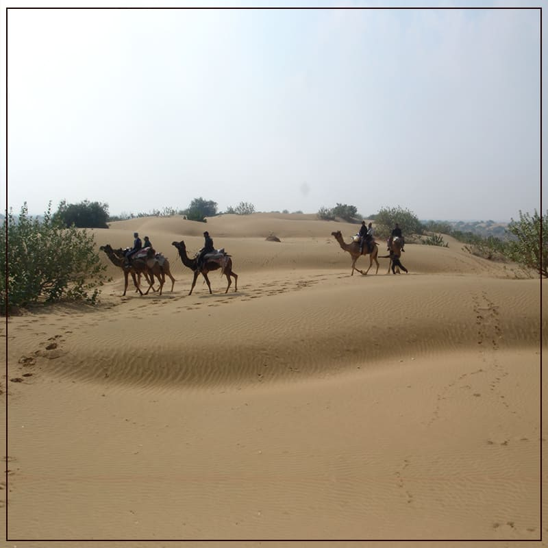 Enjoy the  Most Famous and Iconic Camel Ride In Thar Dessert.