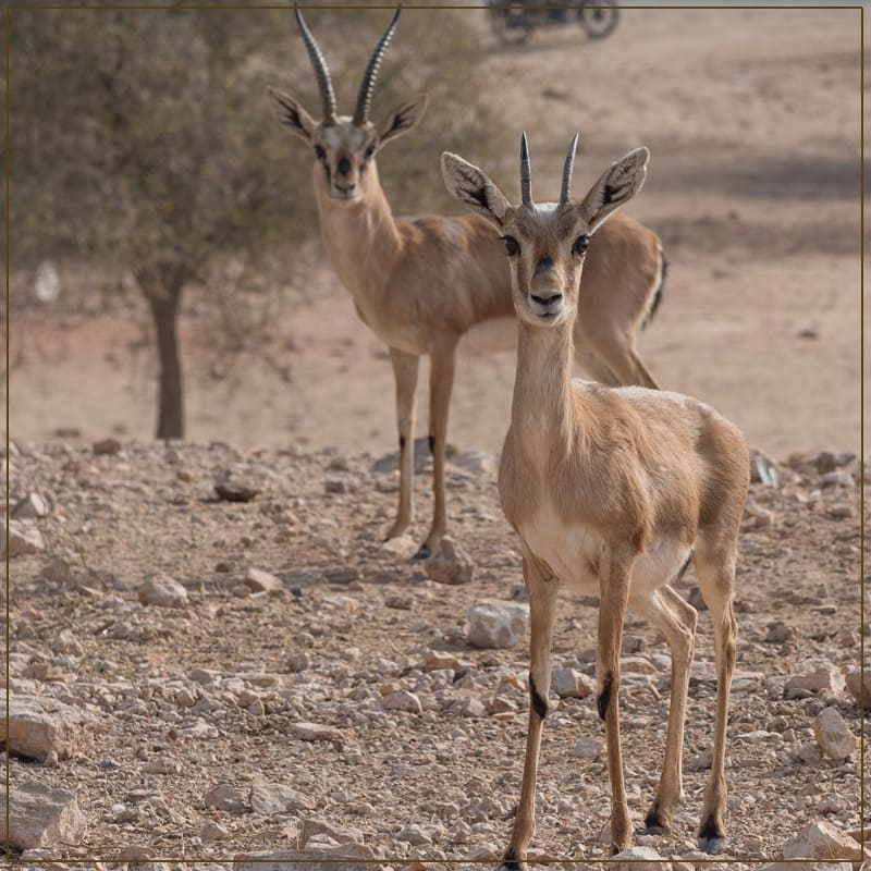 Take a Tour to See The Wild Life In The Dessert